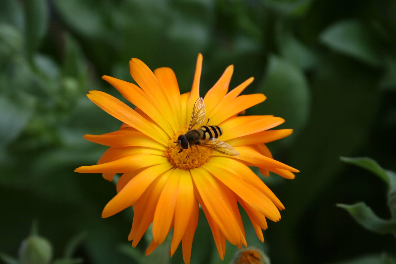 Allergie? Tier und Blüte und anderes