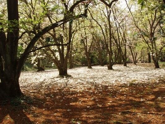 Wald an Ostern