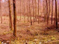 Heilpraktiker-Kreuer-Wald