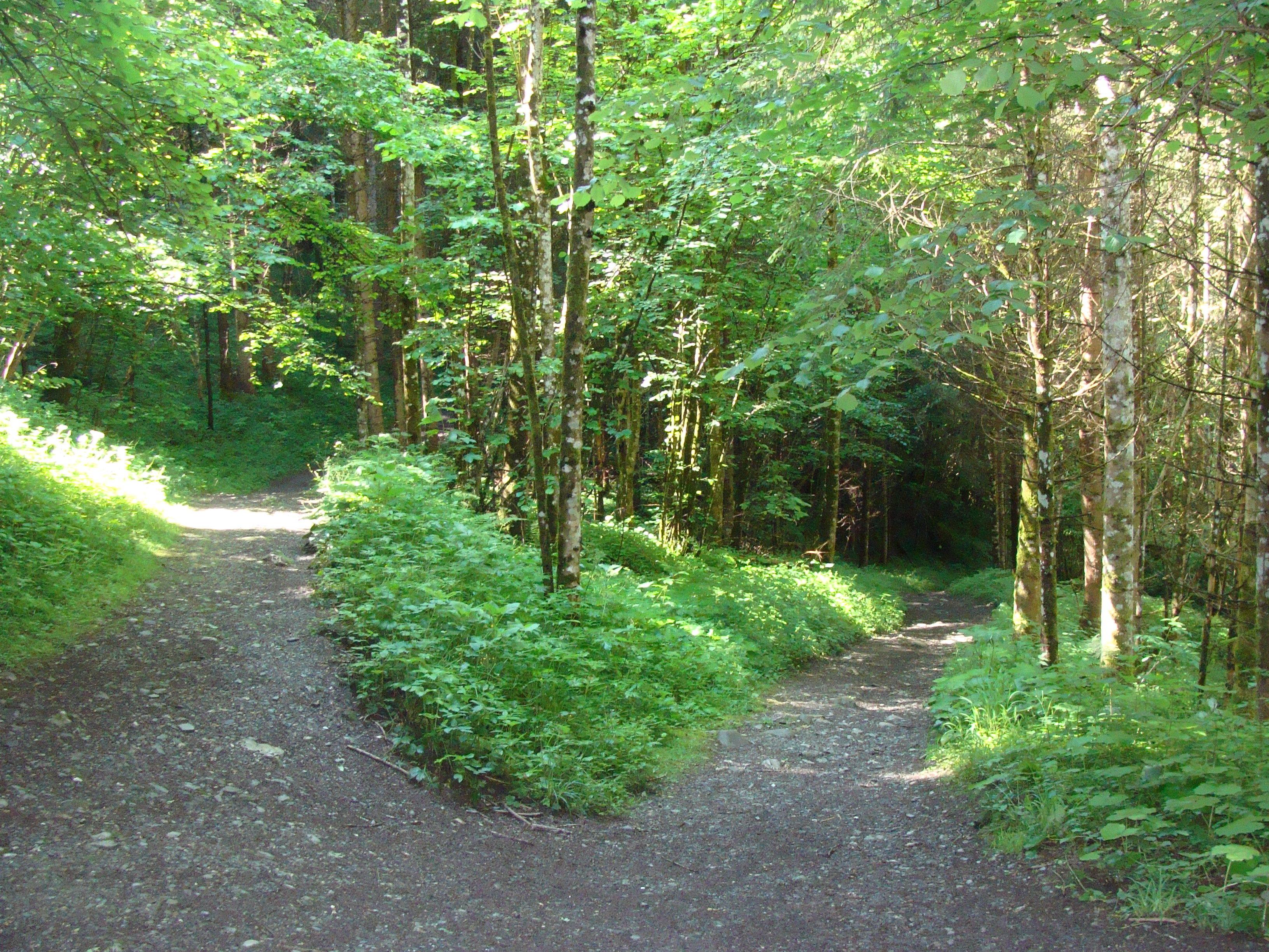 Grüne Lunge. Die Waldluft ist gesund für die Bronchien