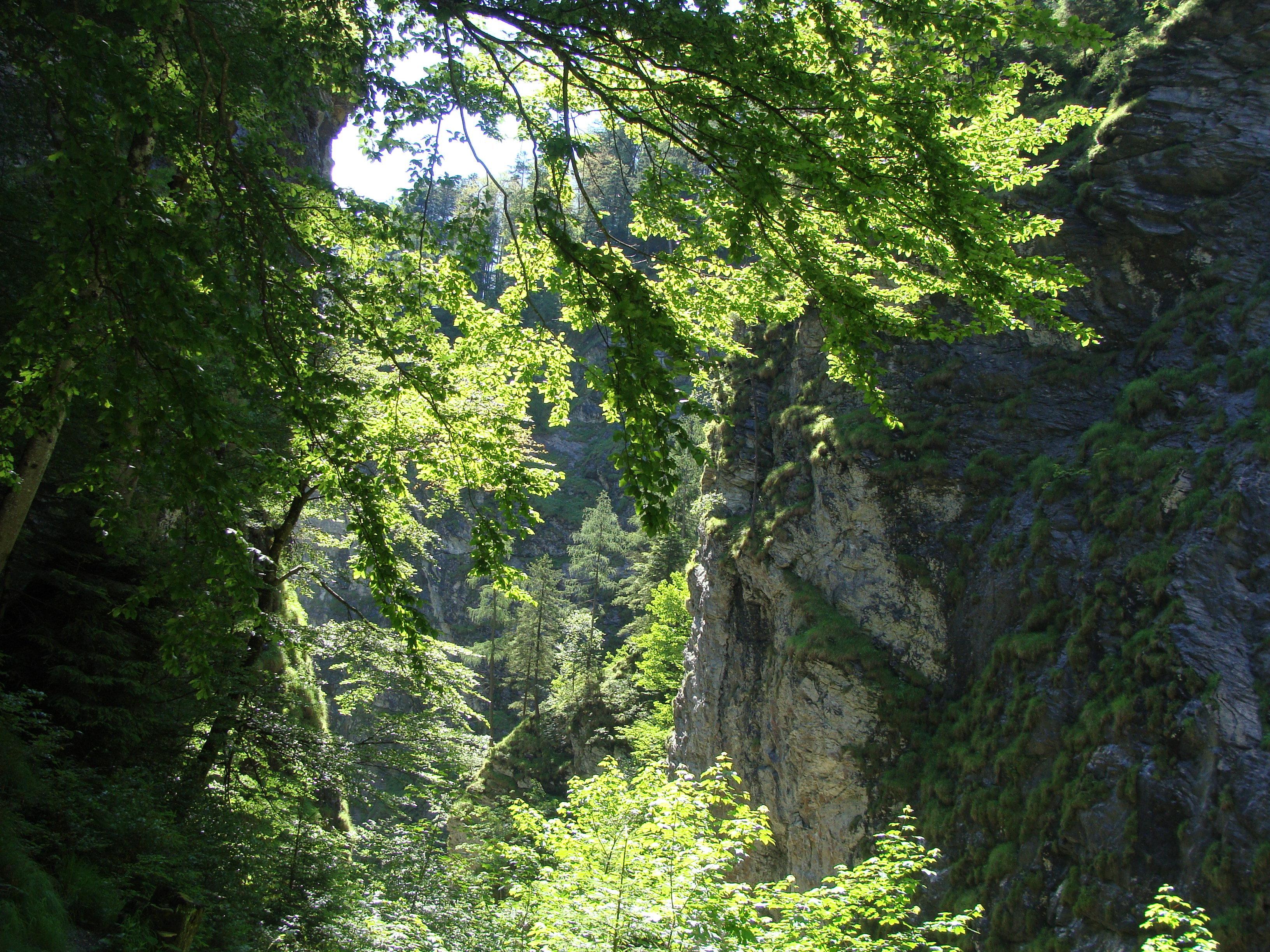 Grüne Natur gegen Gelenkschmerzen
