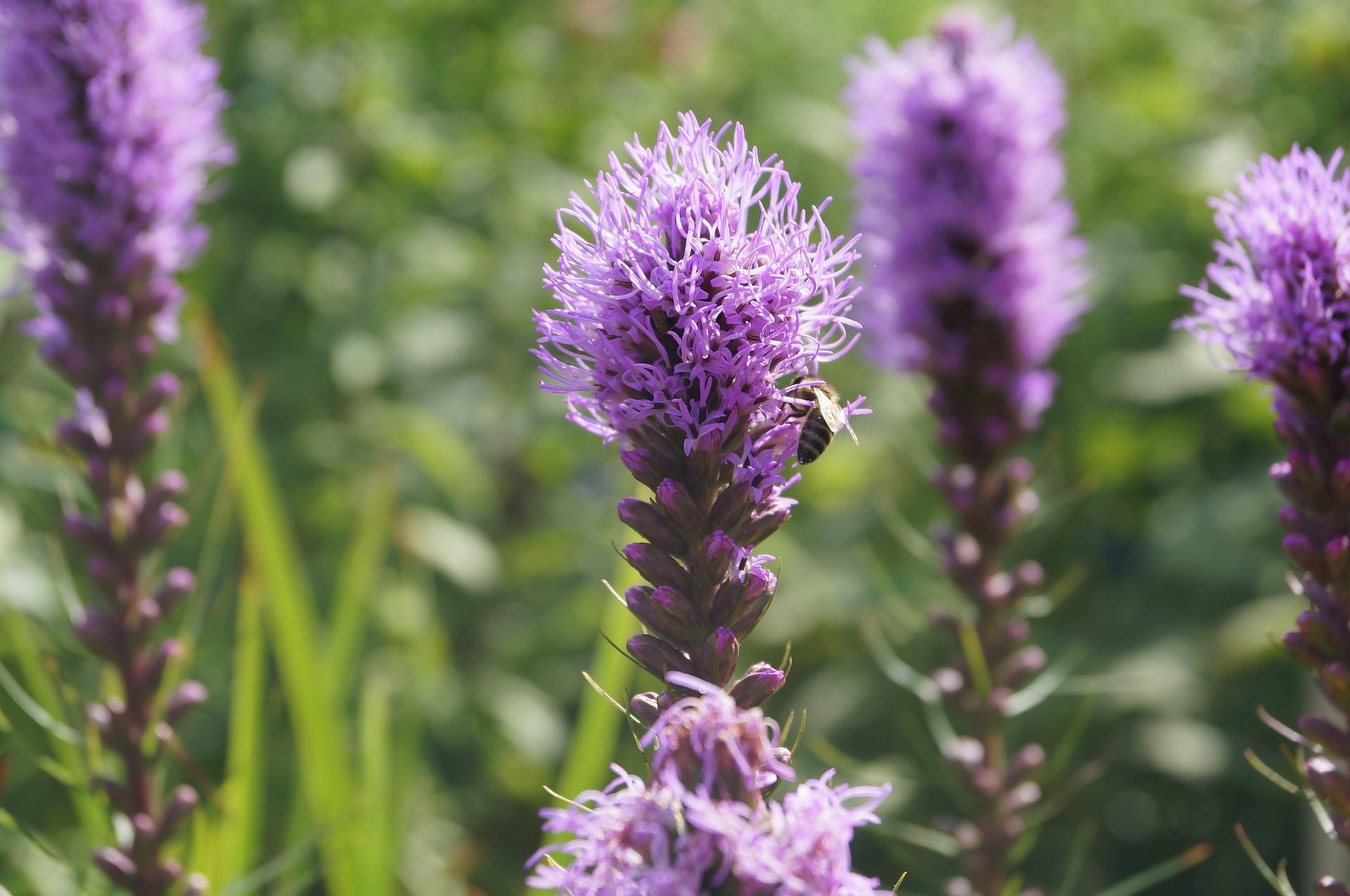 Blumen Schmitterling