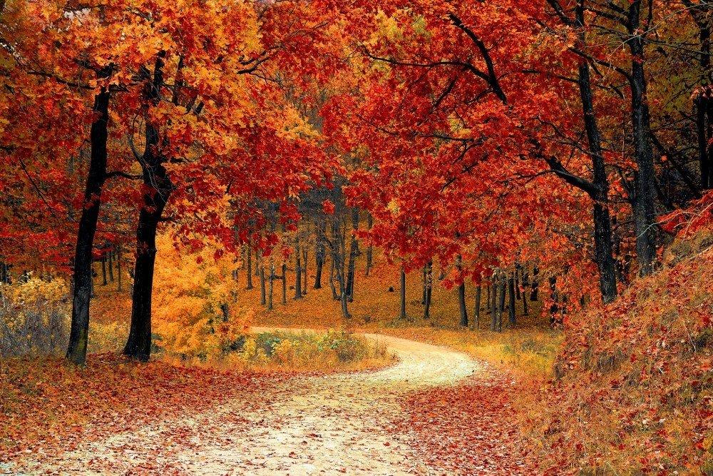wohin wird der Weg uns führen