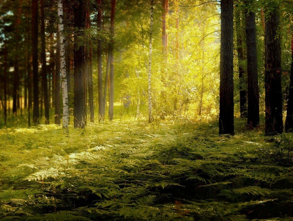Kopfschmerzen, im Wald eher nicht!