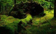 Natur geht ihren natürlichen Weg