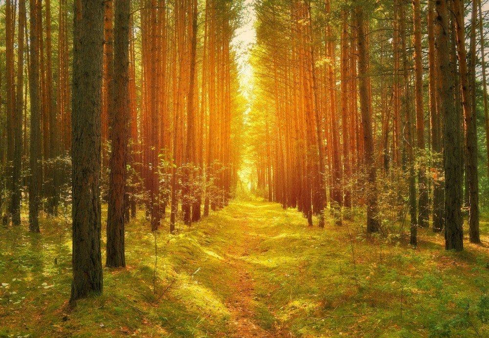 Natur zeigt den Lichtblick