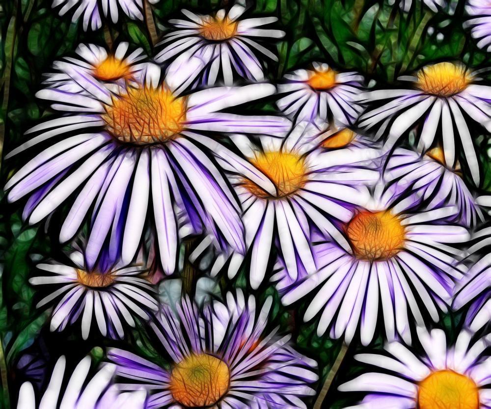 Naturheilkunde hilf auch mit der Kraft der Blumen