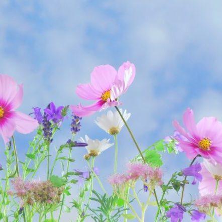 Wildblumen Naturheilkunde